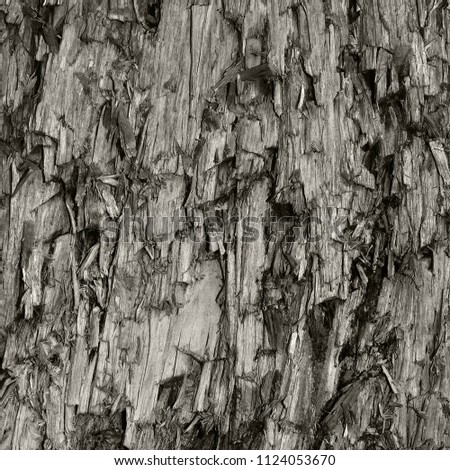 Natural Weathered Grey Taupe Brown Cut Tree Stump Texture. Large Vertical Detailed Wounded Damaged Vandalized Gray Lumber Background Wood Macro Closeup. Dark Black Textured Cracked Wooden Pattern #1124053670