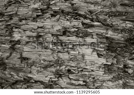 Natural Weathered Grey Taupe Brown Cut Tree Stump Texture, Large Vertical Detailed Wounded Damaged Vandalized Gray Lumber Background Wood Macro Closeup, Dark Black Textured Cracked Wooden Pattern #1139295605