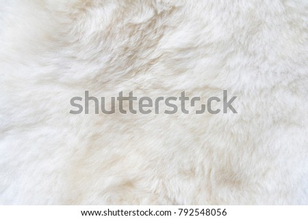 Natural white fur background, design template, copy space #792548056