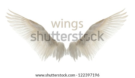 Natural white goose wings Isolation