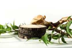 Natural wood podium and green leaves for cosmetic products presentation . Minimal cosmetic background.