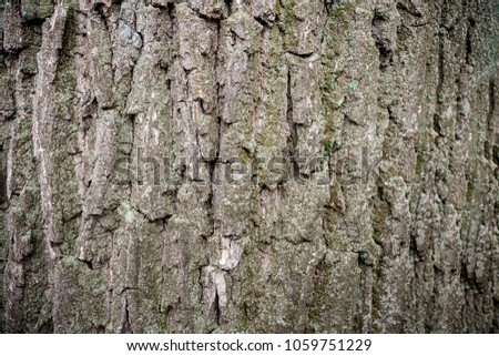 Natural wooden background. Close-up gray-brown bark of old mossy tree. #1059751229