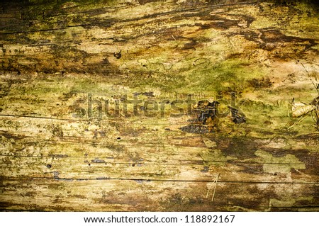 Natural wooden surface in the forest