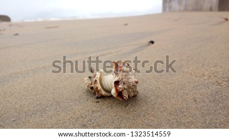 Natural worn seashell in the beach sand closeup picture