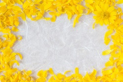 Natural yellow petals into the picture frame. Background texture of white paper.