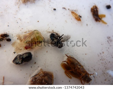 naturally dead, dried and trimmed group of insects and arthropods over a white background consisting in at least one scorpion, one spider, one cockroach, one fly #1374742043