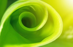 Nature abstract background, green spiral leaf with sunlight, ecology concept