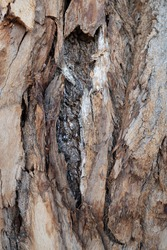 Nature abstract pattern. Bark background.Tree bark pattern. Natural wood surface for dark rough textured theme background.Rustic tree bark texture.Decorative texture of pine bark and wood chips.