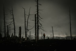 Nature after a strong fire. The fire killed trees and grass. Ashes and ashes on the ground. Dead wood after the eruption of Tolbachik volcano (Russia, Kamchatka). Silhouette of a man (tourist).