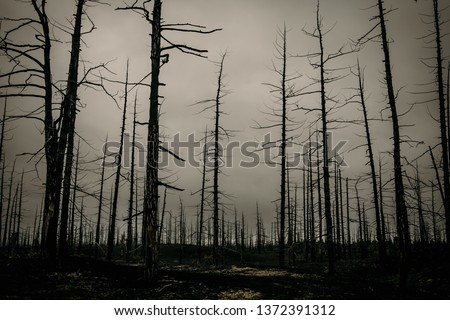 Nature after a strong fire. The fire killed trees and grass. Ashes and ashes on the ground. Dead wood after the eruption of Tolbachik volcano (Russia, Kamchatka). Black ashes.