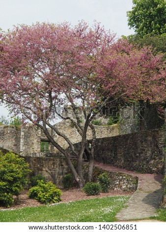 Nature and ruins of a castle. Picture taken in a Park in Montaigu, Vendée, France. Ancient ramparts and medieval castle.