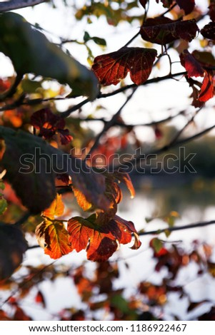 nature and winderful autumn  #1186922467