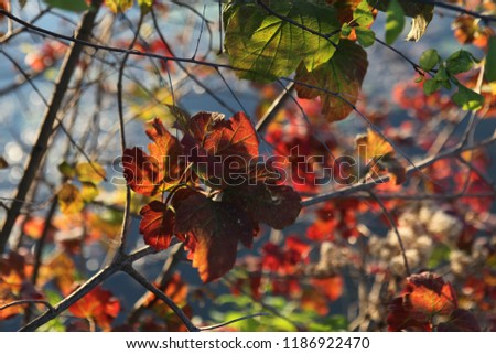 nature and winderful autumn  #1186922470