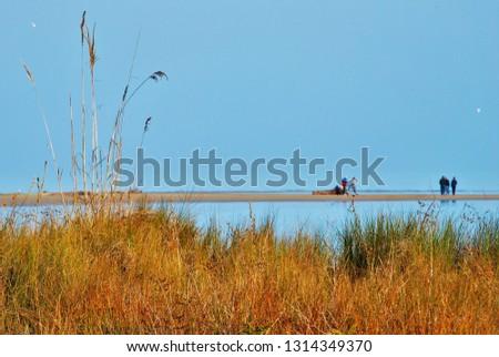 Nature at the mouth of the Tagliamento river Friuli Italy