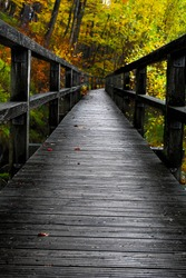 nature, Autumn, wood, autumncolors, brocken, forest