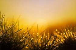 nature background at sunset and river. close up. water drops on grass after rain. the sun is breaking through  grass. place for text. Abstract background. Bitter water leaves of plants. copy space