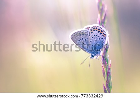 Shutterstock Nature background concept and beautiful summer meadow background. Inspirational nature closeup. Tranquil nature closeup, calm butterfly and colorful natural meadow on defocused background.