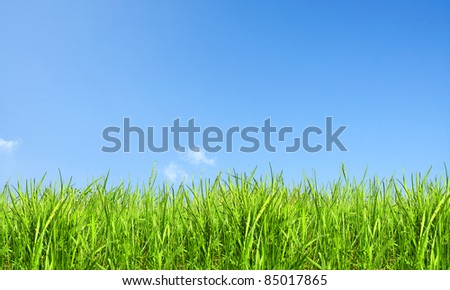 Nature background, grass and sky