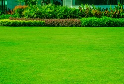Nature background, green grass surface, landscape design, suitable for making green backdrop, lawn for football practice, fresh green lawn on the back, with hedgerow and bright colored shrubs.