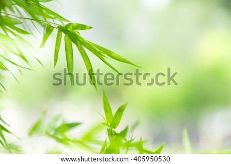 nature background, nature background wallpaper, nature, green nature background, green wallpaper, backgrounds concept.