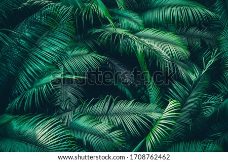 nature background of green forest, tropical forest in green filter stock photo
