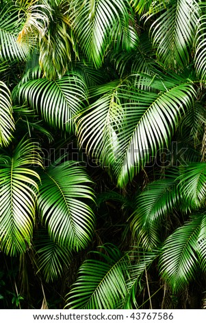 Nature background of tree leaf in tropical area.