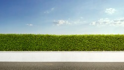 Nature background, panoramic view of beautiful green hedge fence with blue sky
