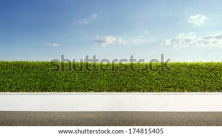 Nature background, panoramic view of beautiful green hedge fence with blue sky #174815405
