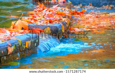 Nature background with autumn leaves floating in stream