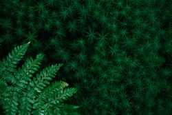 Nature background with copyspace.  Dark green fern and moss.