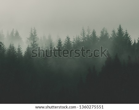 nature background with moody vintage forest #1360275551