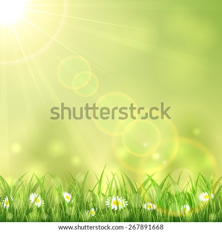 Nature background with the summer Sun and flowers in the grass, illustration.