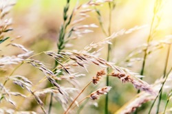 Nature background with wild grass