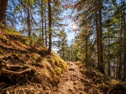Nature Bavarian Forest Trail during Autumn up to the mountain to the Top of the Herzogstand