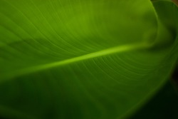 Nature blur greenery bokeh leaf - Close up of a leaf - graphic texture of rain forest plants - vegetation of tropical forest