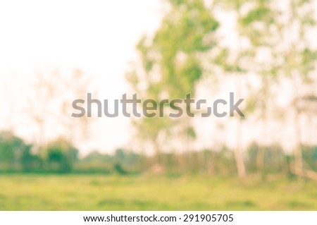 nature blurry background.(blurry background)
