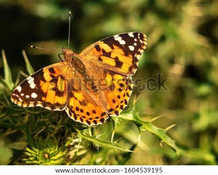 Nature butterfly green macro mta_macro
