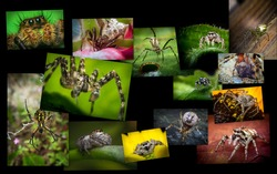 Nature collage of variety of spiders and arachnids shot in extreme closeup macro