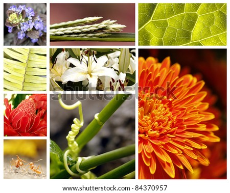 Nature collage with brightly colored fauna and flora
