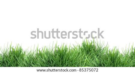 Nature concept. Freshness green grass against white background