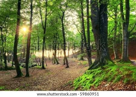 Nature conceptual image. Beautiful green forest in summer.
