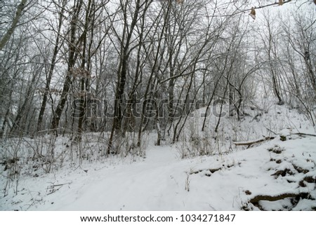 Nature covered in snow during deep winter. Slovakia #1034271847