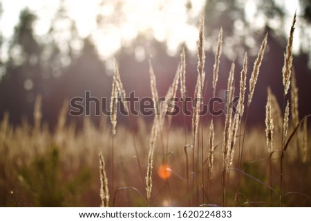 nature deep background natural colours