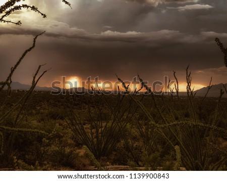 Nature Desert Landscape - Ocotillo Monsoon Rainfall Sunset #1139900843