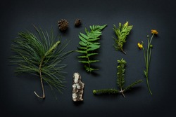 Nature details collection - poster concept. Tree bark, cones, marsh marigold flower, pine tree branches and fern leaf with snail on black background captured from above.