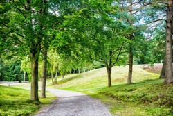Nature, environment and ecology concept. Footpath among green trees, ecology. Path in spring or summer forest, nature. Road in wood landscape, environment.