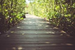 Nature exploring wooden walkway