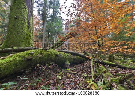Nature. Few virgin forest in Europe, untouched by human hand - stock photo