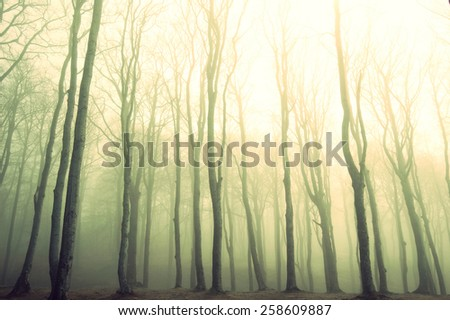 Nature. Fog in dark forest. Vintage instagram picture