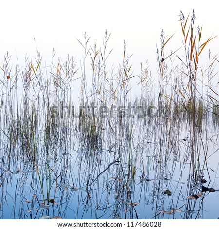 Nature foggy background with coastal reed and shining lake water